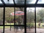 View of sun room facing large park-like back yard where deer like to come visit.