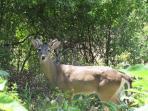 Wildlife at your doorstep!
