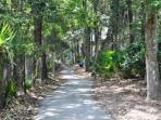 Tropical Beach Path