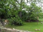 Walnut tree and garden