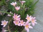 pequeño jardín alegre y colorido