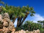 La palma Nana della riserva del monte cofano