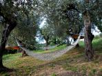 Chill in the hammocks in our olive grove.