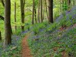 The private woodland offers wonderful walks and a stream to explore