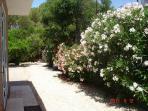 Back garden with orange trees