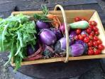 Products of our vegetable garden