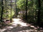 Een wandeling door het bos
