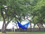 Hammock in park across the street