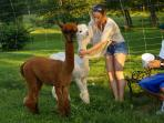 Resident Pets alpacas