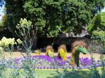 Unusual flower displays in Blackmore Gardens beside the Terrace