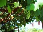 Grape vines in our private parking area provide shade for your vehicle