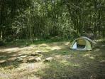 camp en forêt