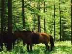 Horse riding provided by Enjoy Inn