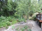 Backyard with blackberry bushes.