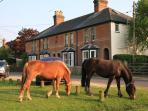 Waters Green cottage and horses