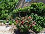 A view of our sunny rose garden.