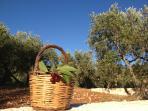 La casa vacanza Trulli La Ginestra offre una vacanza all'insegna del relax, natura e pace interiore
