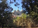Una vista dei Trulli della Casa Vacanza La Ginestra dal boschetto dell'agro.In Valle d'Itria.Ostuni