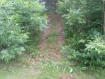 Trail leading up Logan's Hill in the woods