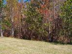 Back yard - Shingle Creek conservation area