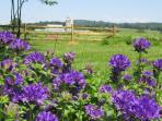 View from Primrose Dale Farm