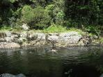 Wild swimming nearby in the River Dart
