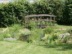 The wildlife garden pond.