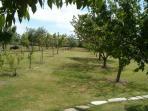 campo/giardino