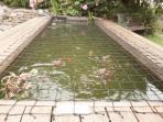 Netted Koi Pond