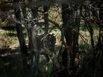 Area Faunistica del Cervo