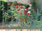 Bouquet du jardin