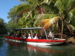 Mangrove tour in the Damas Estuary.