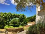 Mediterranean landscaping, with an 'oliveraie' olive grove, lavenders, fruit trees
