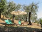 garden grove for sunbathing