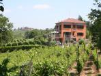 Villa in the vineyards