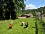 Close to the paddocks and free range hens.