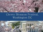 The Cherry Blossoms -A Must See in March Every Year