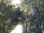 Close by to the Cottage is this beautiful billabong with its native wildlife