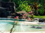 The main pool & garden