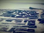 Les parcs à huîtres au port de la Houle