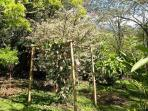 Gardens surrounding the cottage/Jardines alrededor del estudio