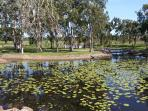 Turtles, ducks, water birds and glorious water lillies all on show at Tyto