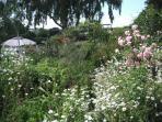Summer wild flowers in the garden.