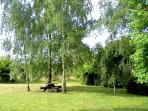 Picnic spot under the silver birches