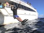 Several snorkel tours depart from Ma'alaea Harbor, nearby at the end of our street