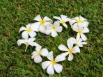 Sweet smelling plumeria blossoms often fall in the courtyard, prompting one guest to arrange them