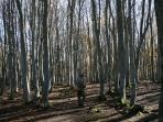 A pochi passi da casa si può raggiungere questo bosco.