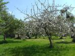 La Belle Grange from the orchard in springtime