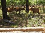 buck deer reunion just feet away from bunkhouse