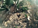 Parque la Paloma cactus zone